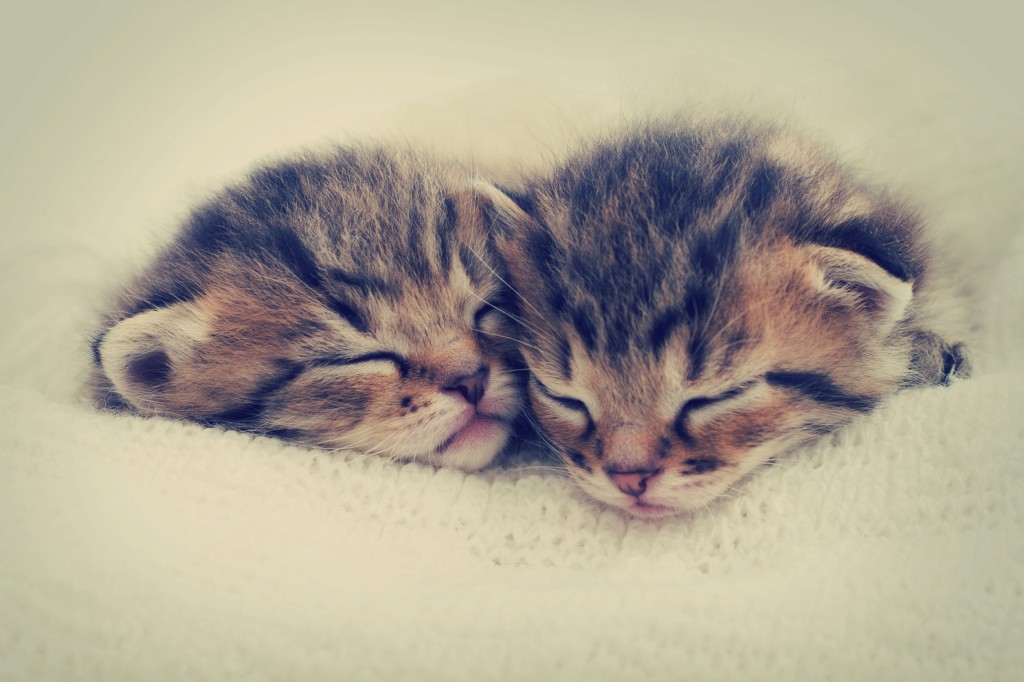 4 Tips to pick the right kitten